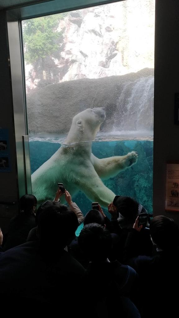 旭山動物園 ホッキョクグマ 行動展示