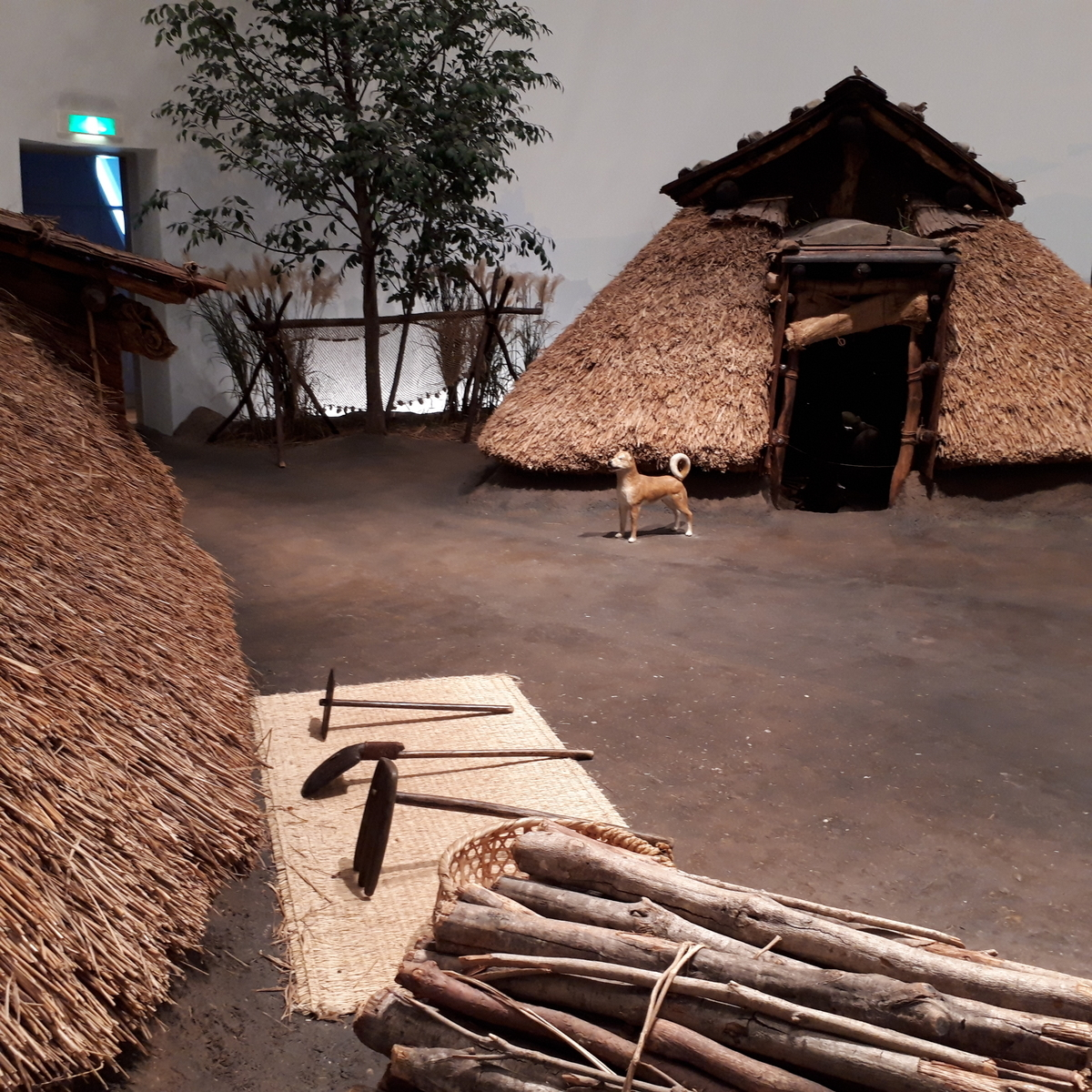指宿市考古博物館 時遊館 Cocco はしむれ 1500年前の古墳時代のムラを再現